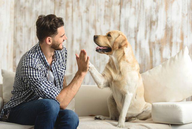 Man giving a dog a high five