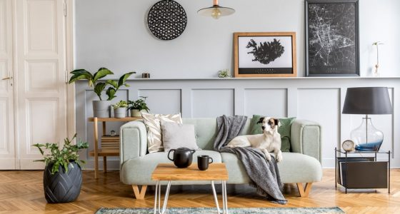 Contemporary living room with a dog on the sofa